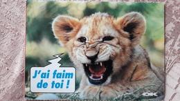 Lionceau J'ai Faim De Toi Carte Ok Podium - Leones