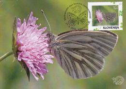 Slovenia, Animals, Buterfly - Papillons
