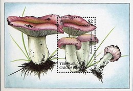 TURKS Et CAIQUES -  Champignons : Russula Carneolilacina - Pilze