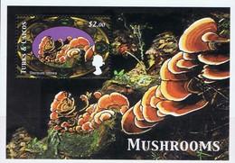 TURKS Et CAIQUES -   Champignons : Stereum Ostrea - Pilze