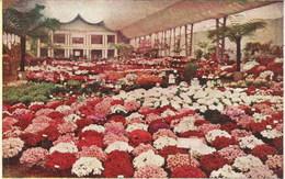 GAND-GENT - Exposition Internationale Et Universelle De 1913 - Floralies - N'a Pas Circulé - Gent