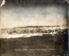 REINDEER RENNE CAPE PRINCE OF WALES REINDEER HERD LARGEST IN ALASKA   23*18CM Fonds Victor FORBIN 1864-1947 - Plaatsen