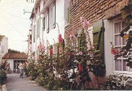 Charente Maritime,  Ile De Re ,la Venelle Aux Fleurs - Ile De Ré