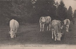 T4  - 25 - Doubs  -  Frontiere Franco Suisse - Un Paturage - Frankrijk