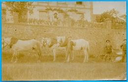 En L'état, CARTE-PHOTO Attelage Avec Charrue * Agriculture - Spannen