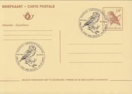 Doc 047 - Steenuil /Chouette Cheveche (Athene Noctua) - Entiter Postal - 1985-.. Oiseaux (Buzin)