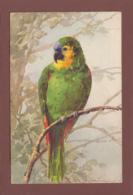 Catharina KLEIN - Signé - Oiseau - Perroquet - Klein, Catharina