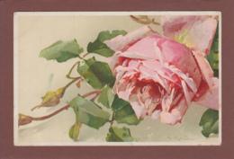 Catharina KLEIN - Signé - Fleurs - Rose - Klein, Catharina