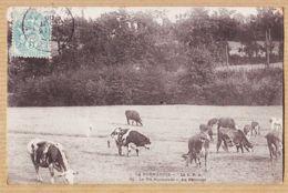 X14141 CALVADOS La Vie Normande AU PATURAGE Troupeau Vaches 1905 à DUCROS Rue N.D Nazareth Paris-NORMANDIE LA C.P.A 50 - France
