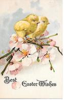 Chick, Poulet, Huhn, Poussin, Küken, Chicken, Pollo, Pulcino, Blossom Branch, Branche De Fleur, Blüte Zweig - Pâques