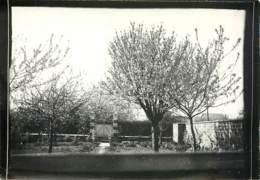 91 - SAVIGNY SUR ORGE - Photo D'un Jardin Vers 1900 - Luoghi