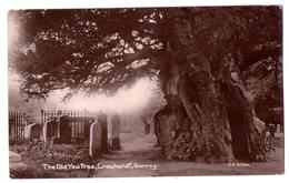 6497 - Crowhurst ( Surrey ) R.U. - The Old Yew Tree - G.H. Gibbs - If Millénaire - - Surrey