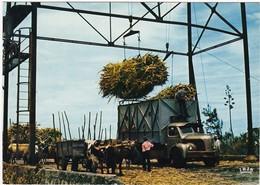 LA REUNION:  CHARGEMENT De La CANNE à SUCRE  Pour L'usine N° 7565 (neuve) - La Réunion