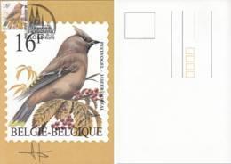 Doc 154 - Carte Maximum: Jaseur Boréal / Pestvogel (Signée) - 1985-.. Oiseaux (Buzin)