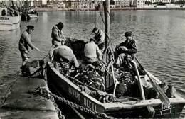 29* AUDIERNE Pecheurs Sardines (cpsm 9x14)  MA100,1387 - Pesca