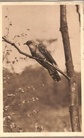Austria & Circulated, Österreichischer Tierschutzverein Kuckuck, Wien 1933 (7779) - Oiseaux