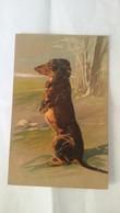 CPA Postcard   TECKEL ..chien .. Annimal .. Carte  Gauffrée - Hunde
