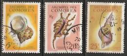 Comores N° 22 - 24  Coquillages - Comoro Islands (1950-1975)
