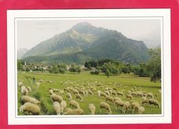 Modern Post Card Of Entracque,Valle Gesso,Piemonte, Italy.A49. - Otras Ciudades