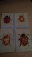 CSM -  COCCINELLES - Insectos