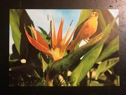 Pajaro - Pájaros