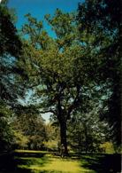 DORDOGNE CHATEAU DE HAUTEFORT  LE PARC LE VIEUX CHENE ET LE BANC TRIANGULAIRE(scan Recto-verso) KEVREN0451 - France