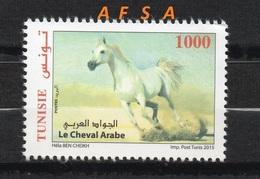 Le Cheval Arabe (Tunisie 2015) // The Arabian Horses (Tunisia 2015) - Cavalli