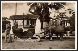 1609 - Foto Madeira Ochsen Ochsengespann Gespann Kuh Stier - Photographie