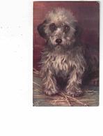 DANDIE DINMONT Dog, 1915 Tuck Postcard, Split Ring Phillipsburg East, Quebec, Canada, S/A Watson - Chiens