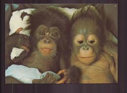 SINGES ZOO DE LA PALMYRE - Scimmie
