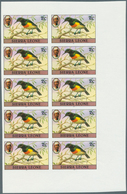 Thematik: Tiere-Vögel / Animals-birds: 1983, Sierra Leone, Definitive Birds, 2c., 15c. And 20c., Eac - Vögel