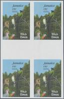 Thematik: Tiere-Vögel / Animals-birds: 1995, Jamaica. IMPERFORATE Cross Gutter Block Of 4 For The So - Vögel