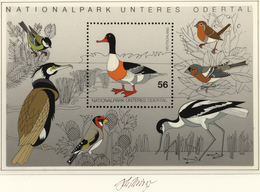 Thematik: Tiere-Vögel / Animals-birds: 2003, Bund, Nicht Angenommener Künstlerentwurf (33x22) Von Pr - Vögel