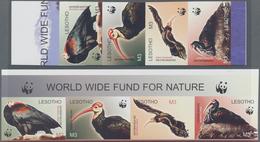 Thematik: Tiere-Vögel / Animals-birds: 2004, LESOTHO: WWF 'Southern Bald Ibis' (Geronticus Calvus) C - Vögel
