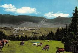 Cartolina Asiago Panorama Con Mucche Da Malga Fassa Anni '60 - Vicenza