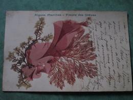 Algues Marines - Fleurs Des Grèves - Botanik