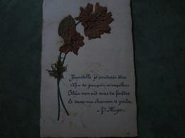 Fleur Sèchée - Hirondelle Je Voudrais être.......(poème De Victor Hugo) - Botanik
