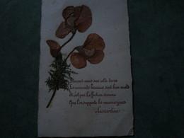 Fleur Sèchée - Aimons-nous Sur Cette Terre.......(poème De Lamartine) - Botanik