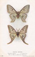 Graellsia Isabellae Exotic Moths Natural History Museum Postcard - Insecten