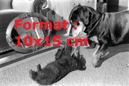 Reproduction D'unePhotographie Ancienne D'un Ourson Sur Le Dos Jouant Avec Un Chien En 1957 - Reproductions