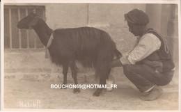 Malte - Malta - Halib Goat Chevre - Malta