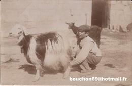 Malte - Malta - Maltese Milkman Goat Chevre - Malta