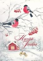 Birds - Bullfinches In Winter Landscape - Raija Riihimäki - Autres