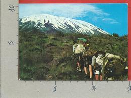 CARTOLINA VG KENIA - Mt. Kilmanjaro Where You Can Walk To The Top - 10 X 15 - 1983 - Kenia