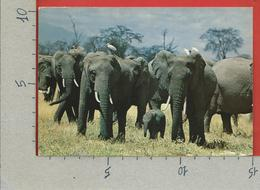 CARTOLINA VG KENIA - African Wildlife - Elephants - 10 X 15 - 1982 - Kenia