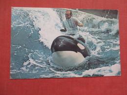 Riding A Whale  Sea World Shamu    Ref 3847 - Unterhaltung