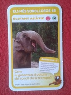 SPAIN CROMO COLLECTIBLE CARD ELEFANTE ELEPHANT ELEFANT ASIÀTIC ASIAN ASIA ASIE COLECCIÓN SUPER ANIMALS CONDIS ZOO....VER - Old Paper