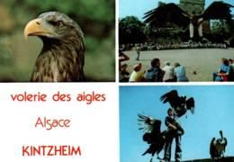 CPM - VOLERIE DES AIGLES - CHÂTEAU KINTZHEIM (67) - SPECTACLE ... - Birds