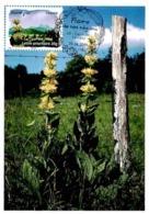 Carte Maximum 2009 - Flore Des Régions. La Flore Du Sud. La Gentiane Jaune (Auvergne). - Maximum Cards