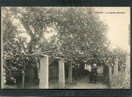 CPA - Karten Bost - ROSCOFF - Le Figuier Séculaire, Animé  (dos Non Divisé) - Roscoff